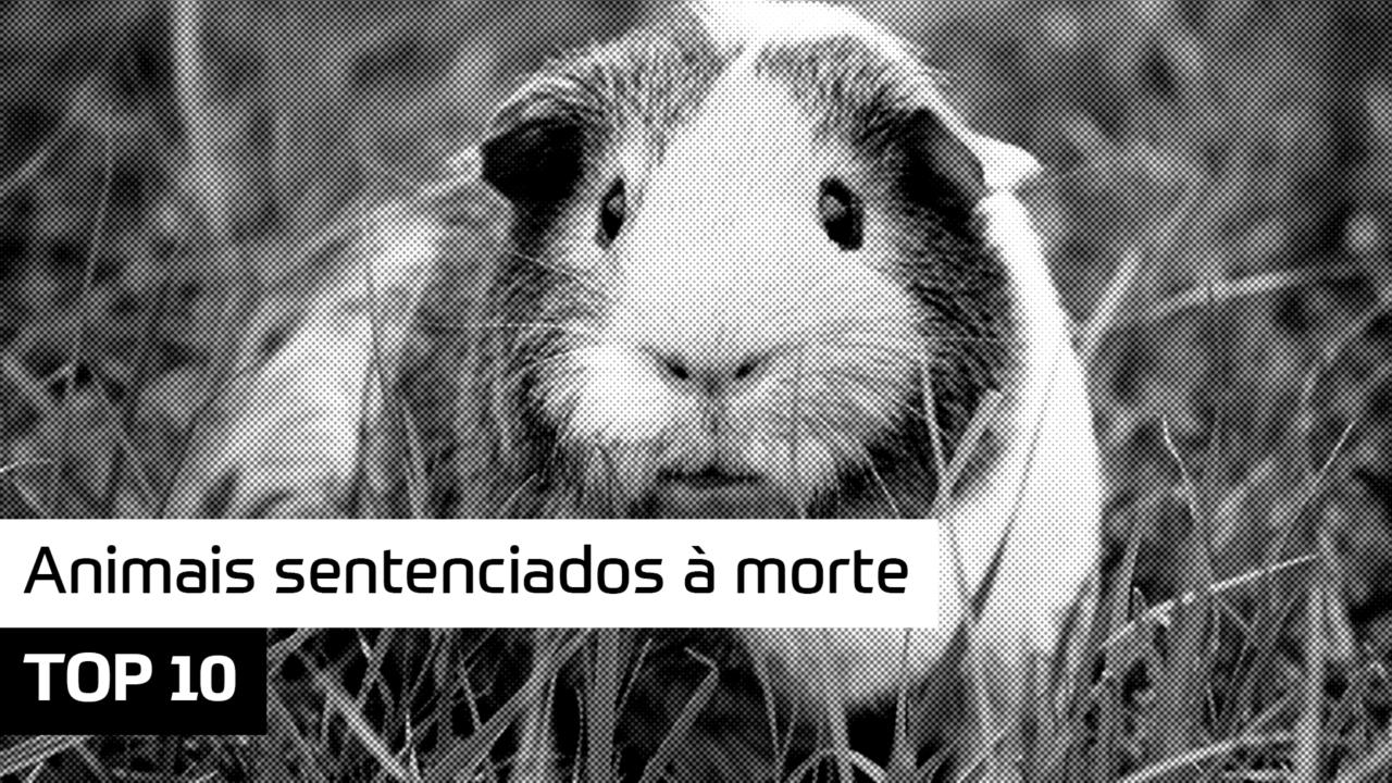 TOP 10 – Animais sentenciados à morte